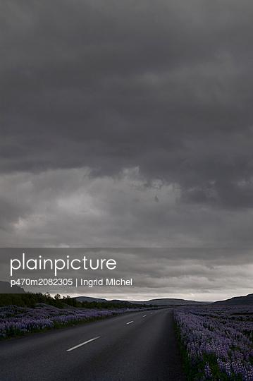 Lupinenfelder in Island - p470m2082305 von Ingrid Michel
