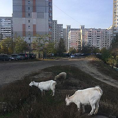 Kiew - p1401m2037401 von Jens Goldbeck