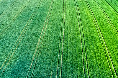 Germany, Baden-Wuerttemberg, Rems-Murr-Kreis, Aerial view of green field - p300m1587657 by Stefan Schurr