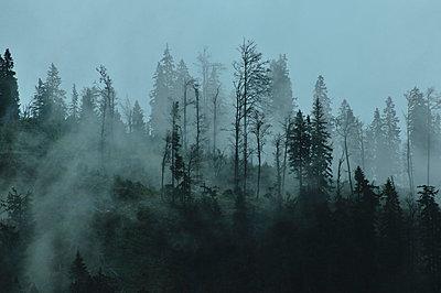 Waldschaden nach einem Sturm - p9791679 von Schickhofer