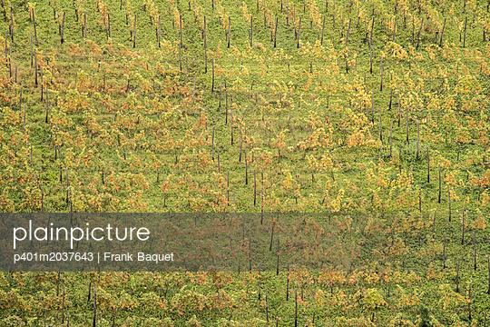 Weinberg im Herbst - p401m2037643 von Frank Baquet