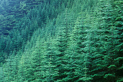 Forest - p5148385f by a.collectionRF