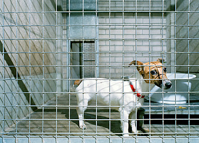 Doggy in kennel - p1132m925588 by Mischa Keijser