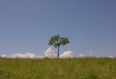 Meadow - p1153m951526 by Michel Palourdiau
