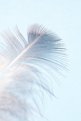 Delicate feather - p1228m2215095 by Benjamin Harte