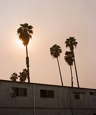 Palm Trees, Sun and Smog - p1431m2247647 by Daniel R. Lopez