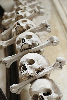 Skulls and bones - p1670m2253292 by HANNAH