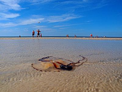 Strand von Sylt - p338m971716 von Marion Beckhäuser