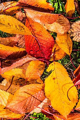 Leaf vein - p488m1087598 by Bias