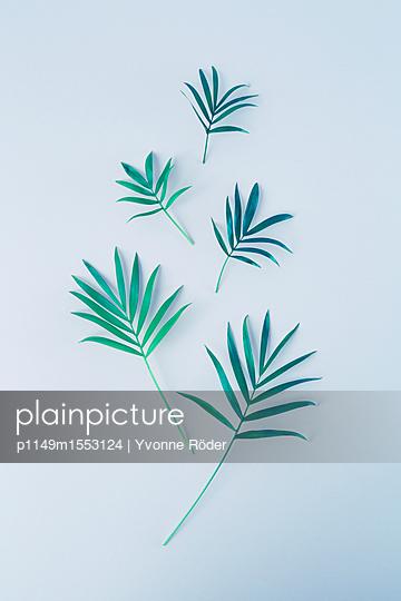 Palm fronds, Chamaedorea elegans - p1149m1553124 by Yvonne Röder
