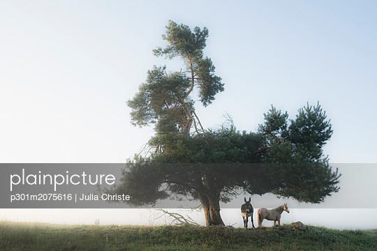 p301m2075616 von Julia Christe