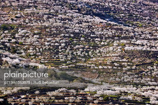 Cherry blossom in Jerte valley - p719m1563575 by Rudi Sebastian