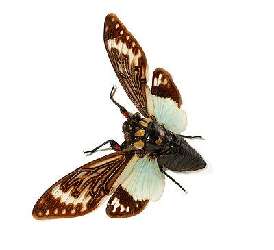 Moth - p959m1055693 by Appold