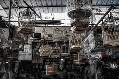 Vogelmarkt in Shanghai - p1243m1059599 von Archer