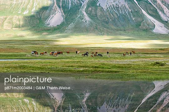 p871m2003484 von G&M Therin-Weise