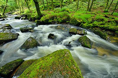 Great Britain, England, Cornwall, Liskeard, River Fowey at Golitha Falls - p300m2042974 by Martin Rügner