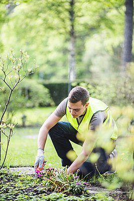 Full length of young man planting at garden - p426m2127619 by Maskot