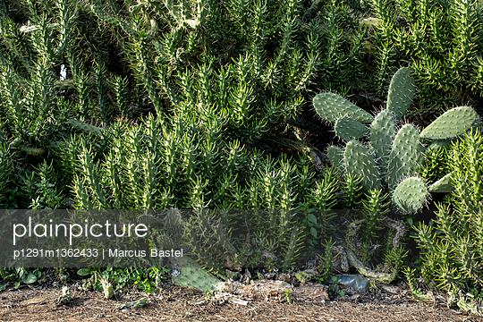 Cactus - p1291m1362433 by Marcus Bastel