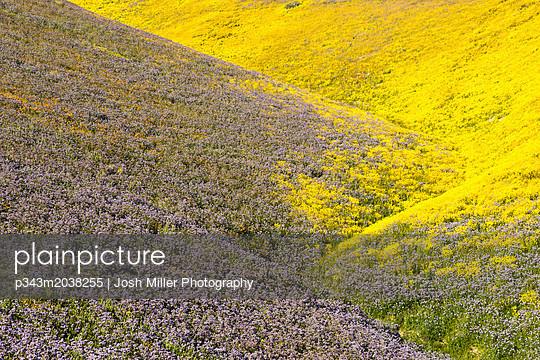 p343m2038255 von Josh Miller Photography