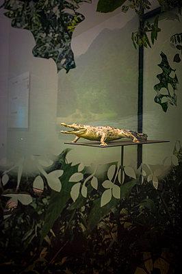 Dak Lak museum, Vietnam - p934m1451336 by Sebastien Loffler