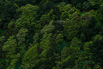 Portugal, Madeira, Treetops - p1600m2175683 by Ole Spata