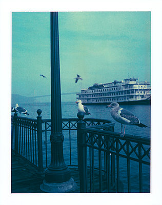 Gulls perched on railing, tourist cruise boat in background - p675m1062917 by Marion Barat
