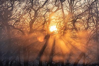 Sunrise in the early morning fog - p739m2071156 by Baertels