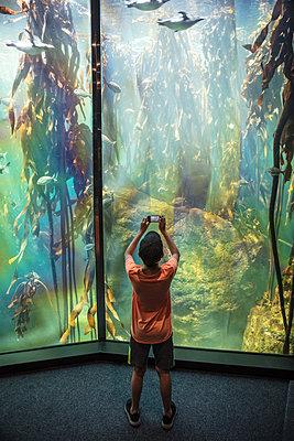 Junge in einem Ozeanium - p1082m2071312 von Daniel Allan
