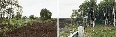 Waldlichtung - p1205m1020932 von Annet van der Voort