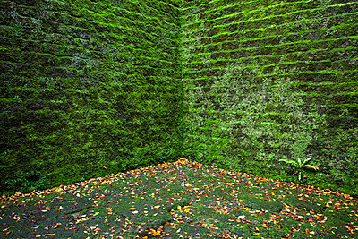 Moss covered wall - p1280m1488286 by Dave Wall