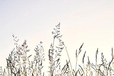 Gräser in einer Wiese - p1312m2116858 von Axel Killian
