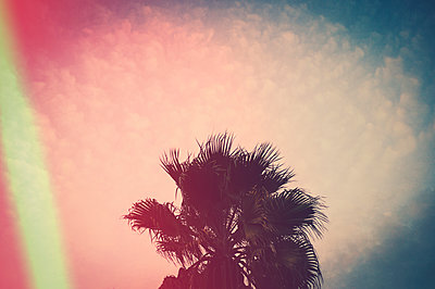 Palm tree at sunset - p1150m1194481 by Elise Ortiou Campion