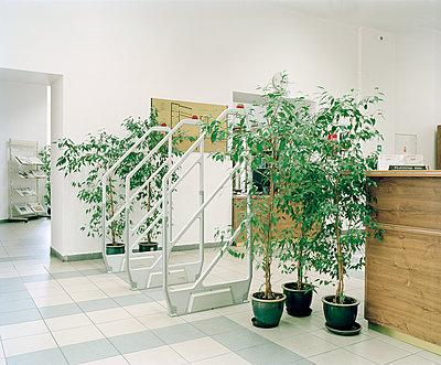 Grünpflanzen in einem Foyer - p1320m1222071 von Matija Brumen