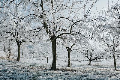 Trees in winter - p300m1228141 by Daniel Weisser