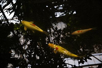 Fische und Spiegelung - p1330m1170988 von Caterina Rancho