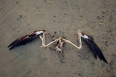 Pelican Wings on Sand - p1636m2216231 by Raina Anderson