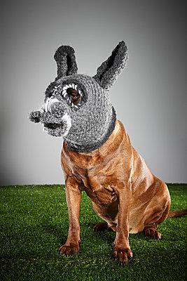 Hund als Esel - p851m955164 von Lohfink