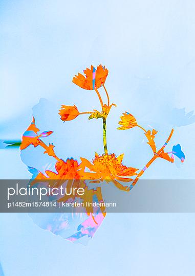 Pflanzen - p1482m1574814 von karsten lindemann
