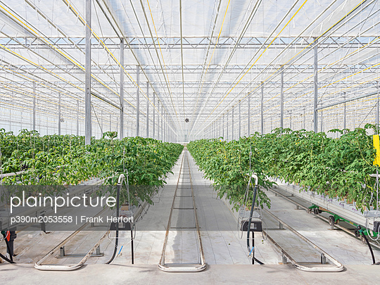 Greenhouse for the artificial and self-sufficient cultivation of vegetables - p390m2053558 by Frank Herfort