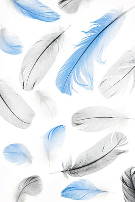 Feathers - p450m1190904 by Hanka Steidle