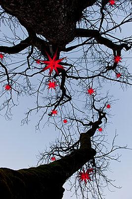 Leuchtende Sternlampions - p533m1474782 von Böhm Monika