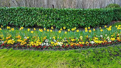 Flowerbed in a park - p813m1131958 by B.Jaubert