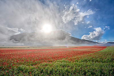 Flowers blooming on plateau Piano Grande, Sibillini National Park, Umbria, Italy - p871m2068891 by Lorenzo Mattei