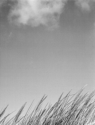 Dune - p1145m954966 by Kerstin Lakeberg