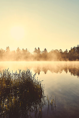 Grass on the shore of a lake - p1312m2275835 by Axel Killian