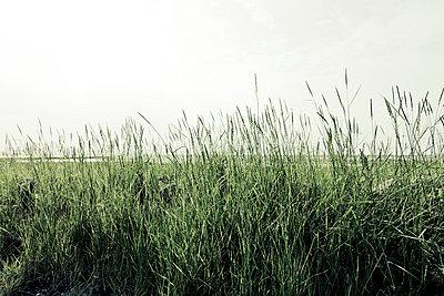 Gräser - p248m816787 von BY