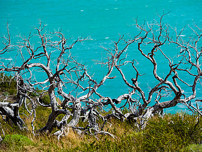 Chile, Patagonia, Torres del Paine National Park, Lago Nordenskjold and dead trees in the foreground - p300m2058711 by Martin Moxter
