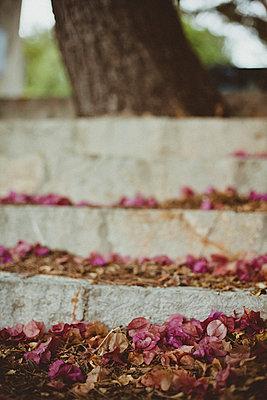 Treppe mit Blütenblättern - p946m779221 von Maren Becker