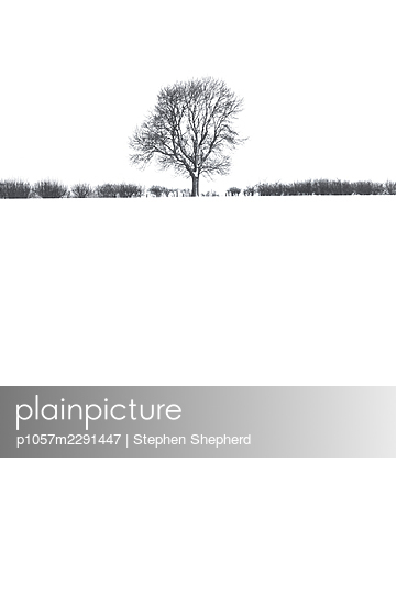 Snow-covered field - p1057m2291447 by Stephen Shepherd