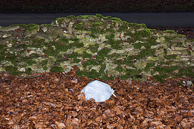 Waste in foliage - p1057m856396 by Stephen Shepherd